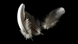 Simple composition - three feathers trembling while waft blowing - isolated on black with a beautiful soft light - 227987290