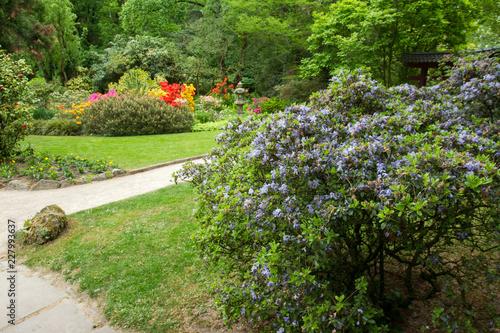 Wall mural Spring. Green   leaves.  Japanese Maple.   Japanese garden.  Leverkusen