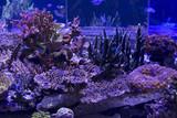 Coral reef aquarium - 228000243