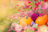 Autumnal garden decoration with pumpkins, heather and dahlia flowers
