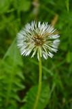 Beautiful wildflowers closeup