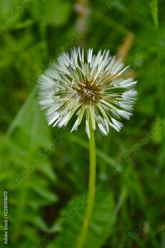 Beautiful wildflowers closeup - 228004670