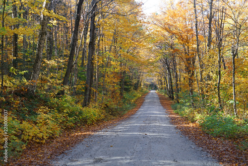 country road in the autumn forest with golden color