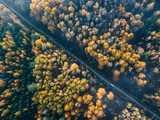 Road in autumn forest. - 228012842