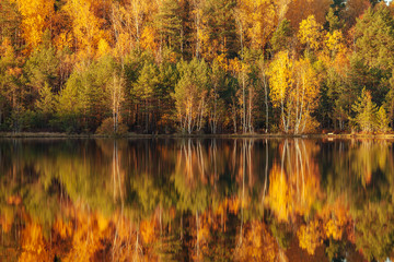 Reflection of trees in water at golden sunset.