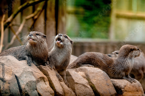 Foto Murales group of otters