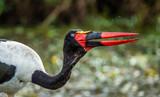 Saddle-billed Stork catches a small fish in a small pond in the savannah. Africa. Kenya. Tanzania. Maasai Mara National parks. Serengeti National parks.