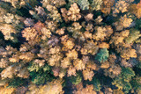 Autumn forest top aerial drone view