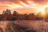 Autumn view of the path by the meadow. - 228023203