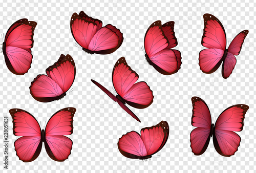 Butterfly vector. Pink isolated butterflies. Insects with bright coloring on transparent background - 228051631