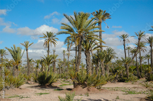 Oasis, Morocco, North Africa