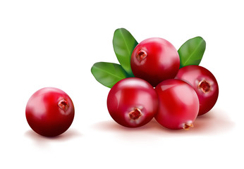 Ripe red cranberries with leaves. Vector illustration © vipman4