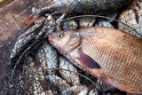 Trophy fishing. Big freshwater common bream fish on landing net.. - 228088029