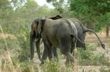 Burkina Faso, habitat, arbres animaux, épices, lac, Afrique