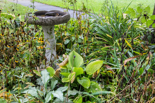 Northern Gardening. Frost and freeze affects perennials in a northern climate as autumn weather arrives.