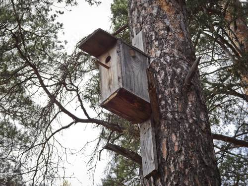 Foto Murales Wooden birdhouse on a pine in a park for birds