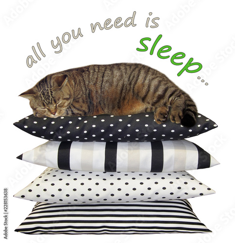 The cat is sleeping on a pile of cushions. All you need is sleep. White background.