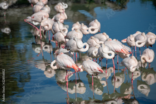 Foto Murales flamingo party