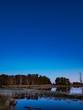 Trees under blue night skies
