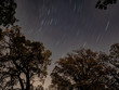 Star trails through the trees
