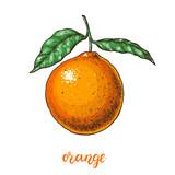 Orange hand drawn vector illustration.