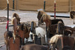 Quadro Medieval merry-go-round activity