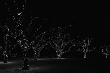 Christmas lights on trees in Victoria, BC, Canada at night. Black and white with some grain. © janaland