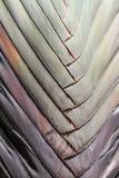 Ausschnitt von flächenmäßig angeordneten Palmblättern