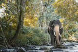 Elephant in northern Thailand