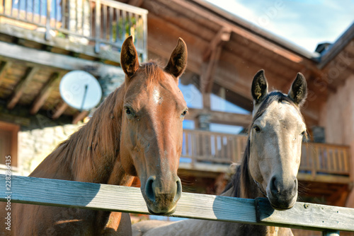 two heads of horses behind a fence in front of wooden cottage