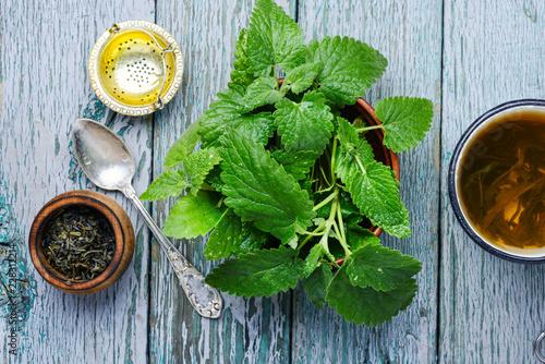 Foto Murales Green melissa herbal tea