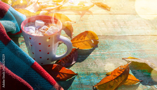 Autumn composition. Cup of cocoa with marshmallow, blanket, autumn leaves on sunny background