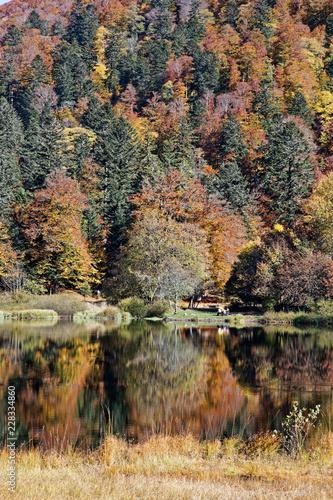Las Vosges jesienią