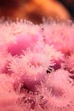 Feeding of coral polyps