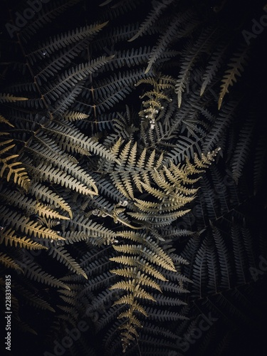 fantastic color ferns - 228339835