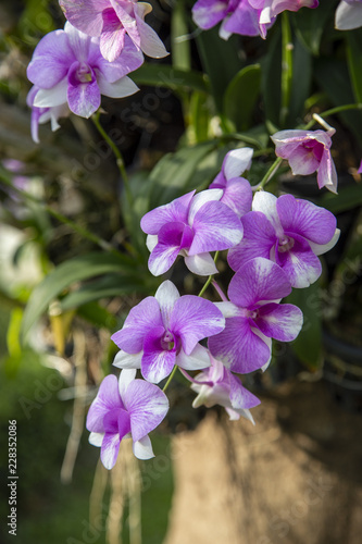 Close-up purple orchid