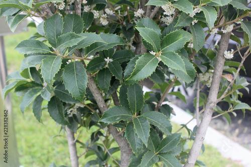 Foto Murales 나무잎