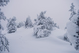 Trees covered by snow at the top of Ruka Hill. Finland - 228389863