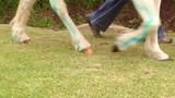 pony feet walking by in slow motion. - 228425037