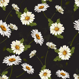 Delicate seamless pattern with chamomile . Vector illustration. - 228428851