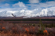 Snow on the Nearby Mountains in Denali National Park, Alaska, USA