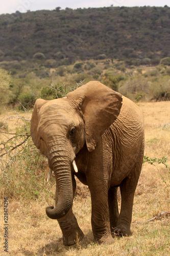 Leinwandbild Motiv African Elephants