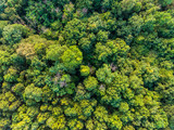 aerial top view of green deciduous tropical forest in southeast asia