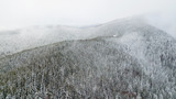 Aerial view of the snow-covered pine branches at the mountains