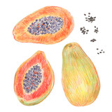 A set of papaya painted with colored pencils isolated on a white background. Whole fruit, seeds and slices in a cut. Food illustration. - 228511697