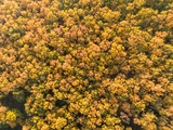 Beautiful autumn forest - top view