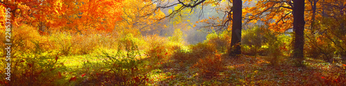 trees in yellow foliage in autumn forest