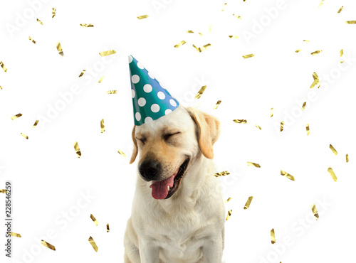 Funny And Happy Dog Celebrating A Birthday Or New Year With A Green