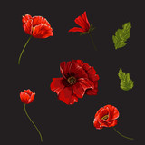 Set with poppies flowers. Vector botanical illustration.