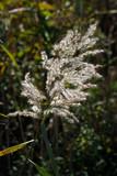 Wildpflanzen in Bayern - 228572256